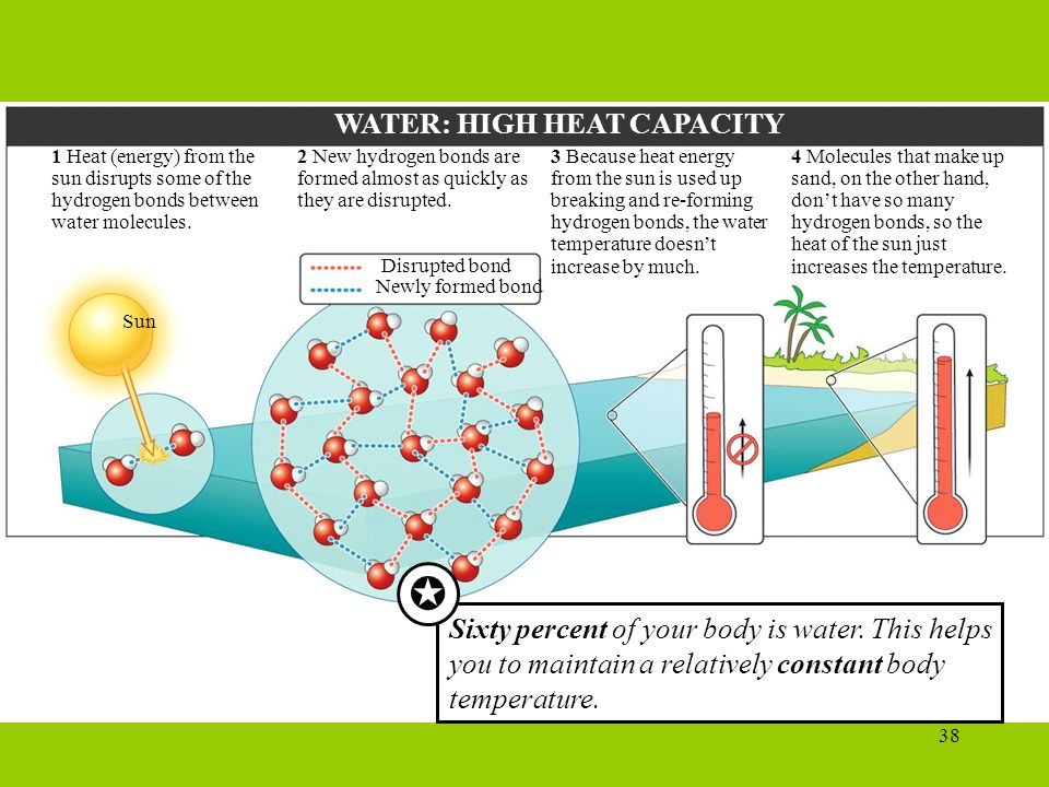  WATER: HIGH HEAT CAPACITY