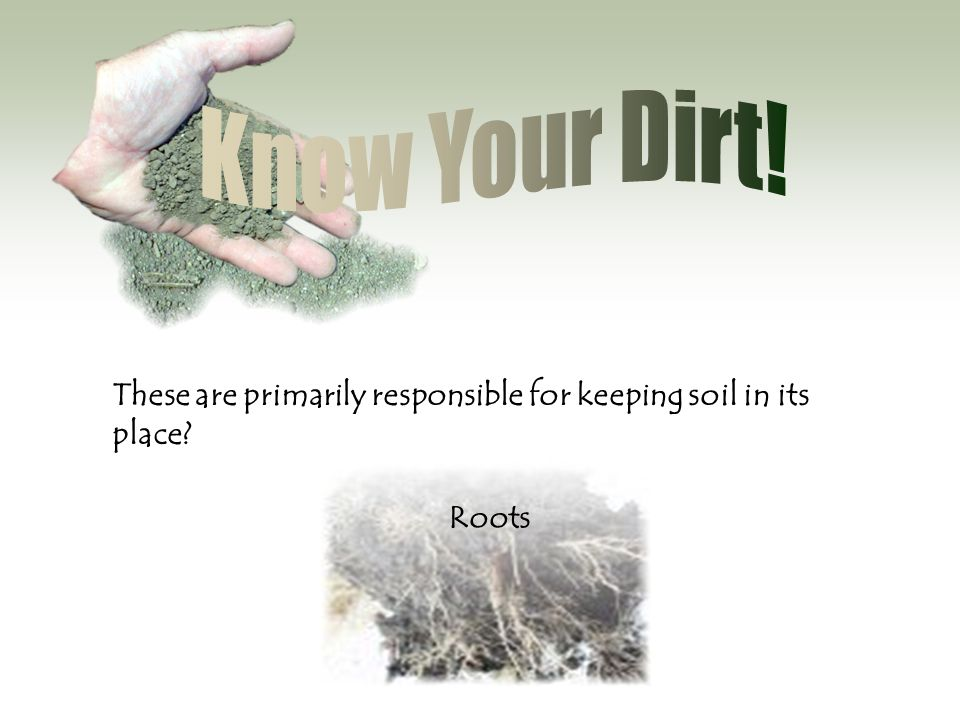 Know Your Dirt! These are primarily responsible for keeping soil in its place Roots