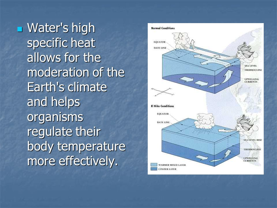Water s high specific heat allows for the moderation of the Earth s climate and helps organisms regulate their body temperature more effectively.
