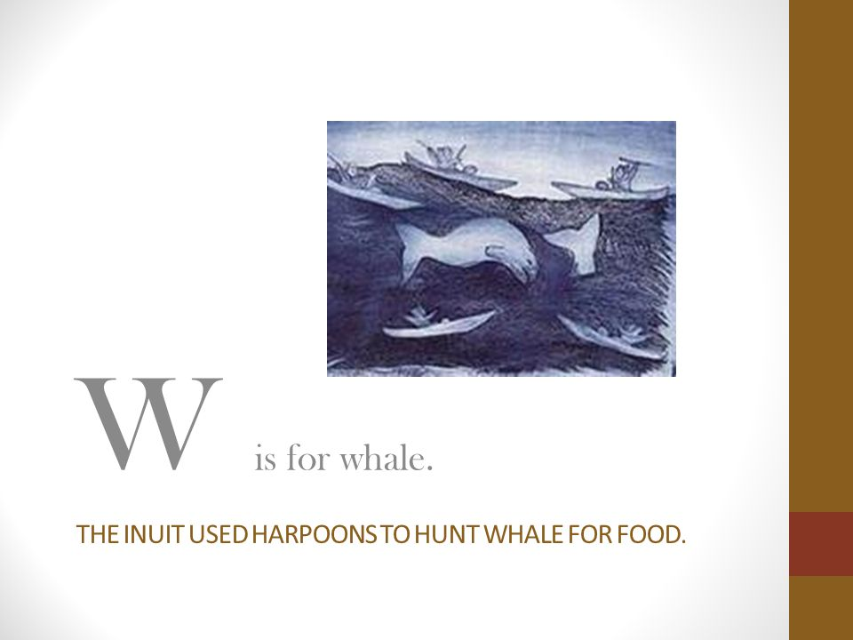 The inuit used harpoons to hunt whale for food.