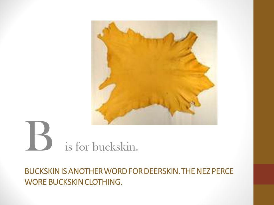 B is for buckskin. Buckskin is another word for deerskin. The nez perce wore buckskin clothing.
