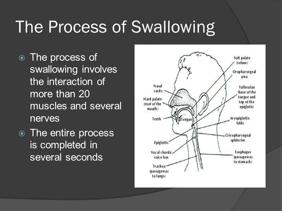 The Process of Swallowing