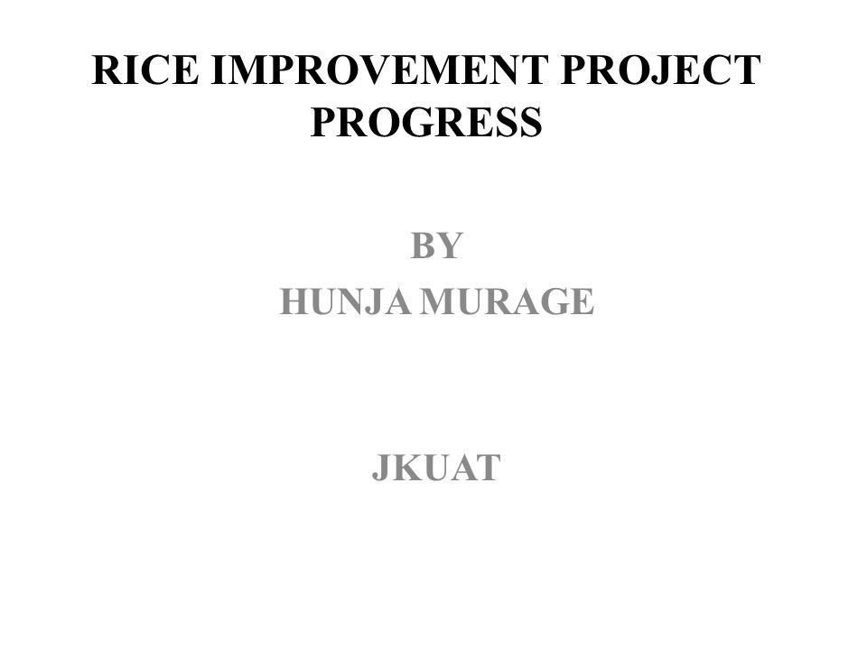 RICE IMPROVEMENT PROJECT PROGRESS