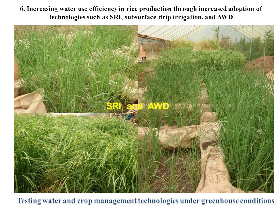 6. Increasing water use efficiency in rice production through increased adoption of technologies such as SRI, subsurface drip irrigation, and AWD