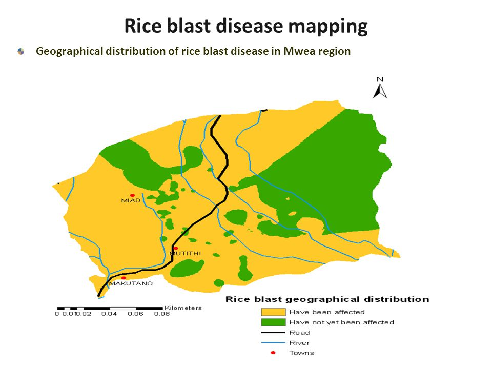 Rice blast disease mapping