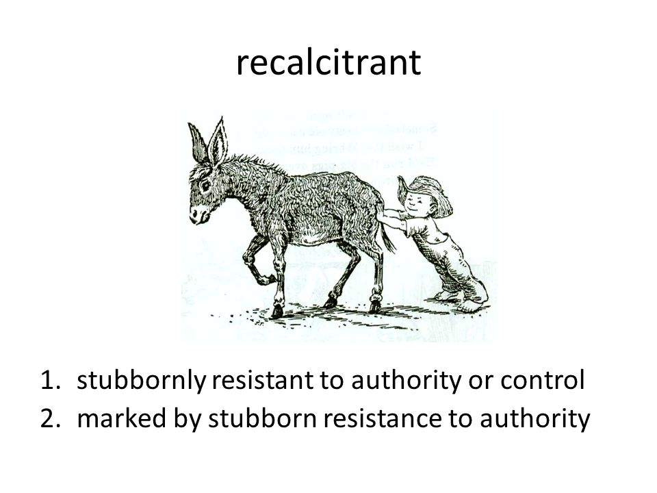 recalcitrant stubbornly resistant to authority or control