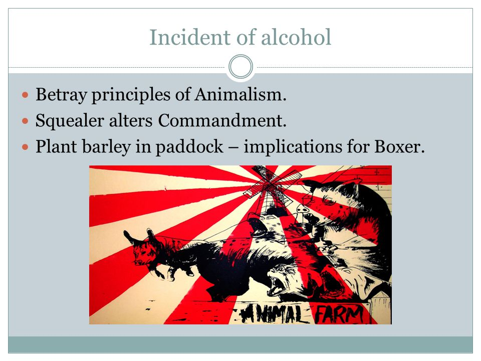 Incident of alcohol Betray principles of Animalism.