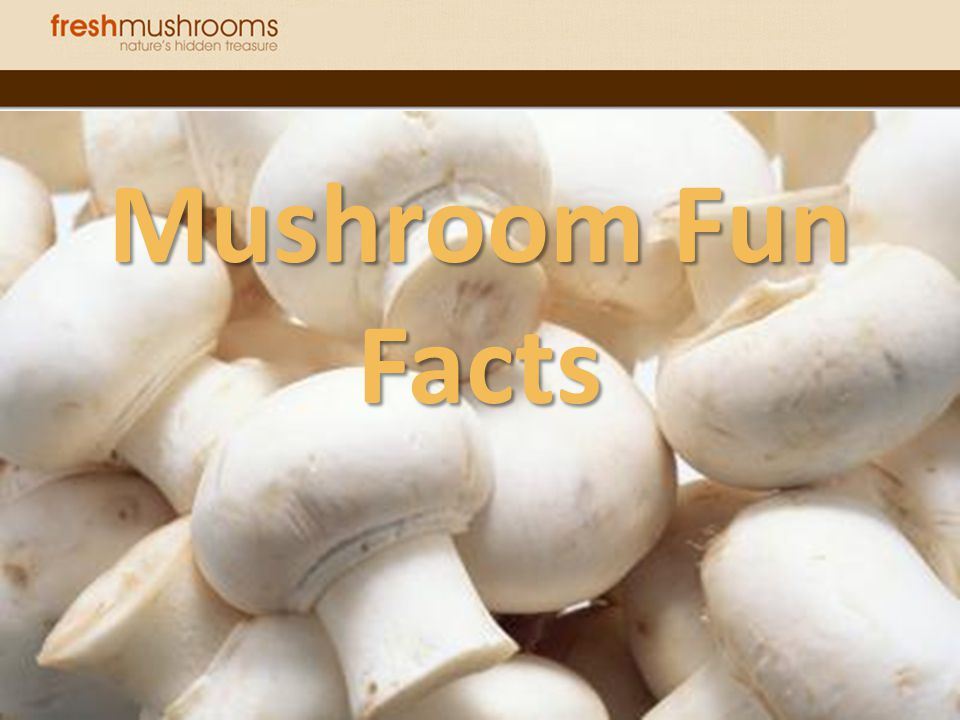 Mushroom Fun Facts