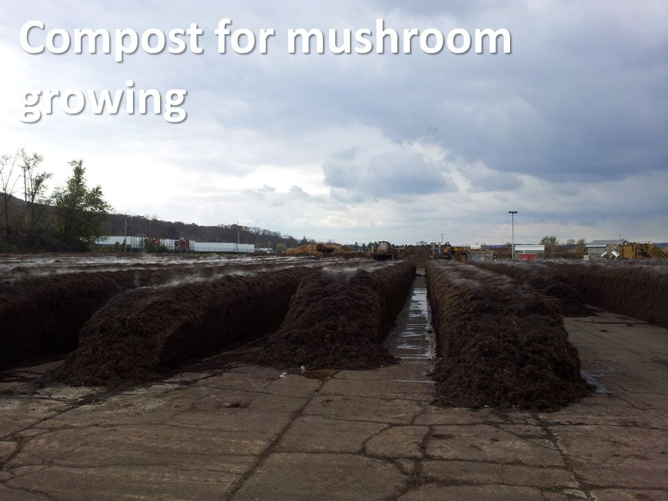 Compost for mushroom growing