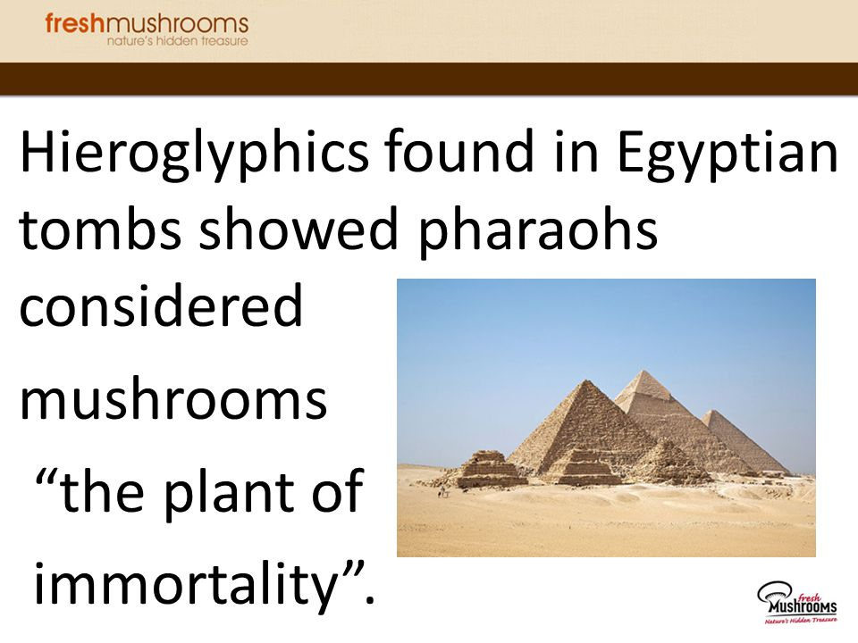 Hieroglyphics found in Egyptian tombs showed pharaohs considered