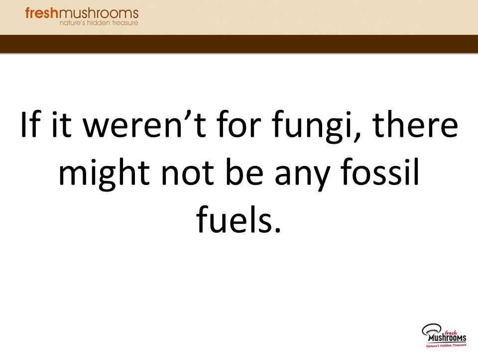If it weren't for fungi, there might not be any fossil fuels.