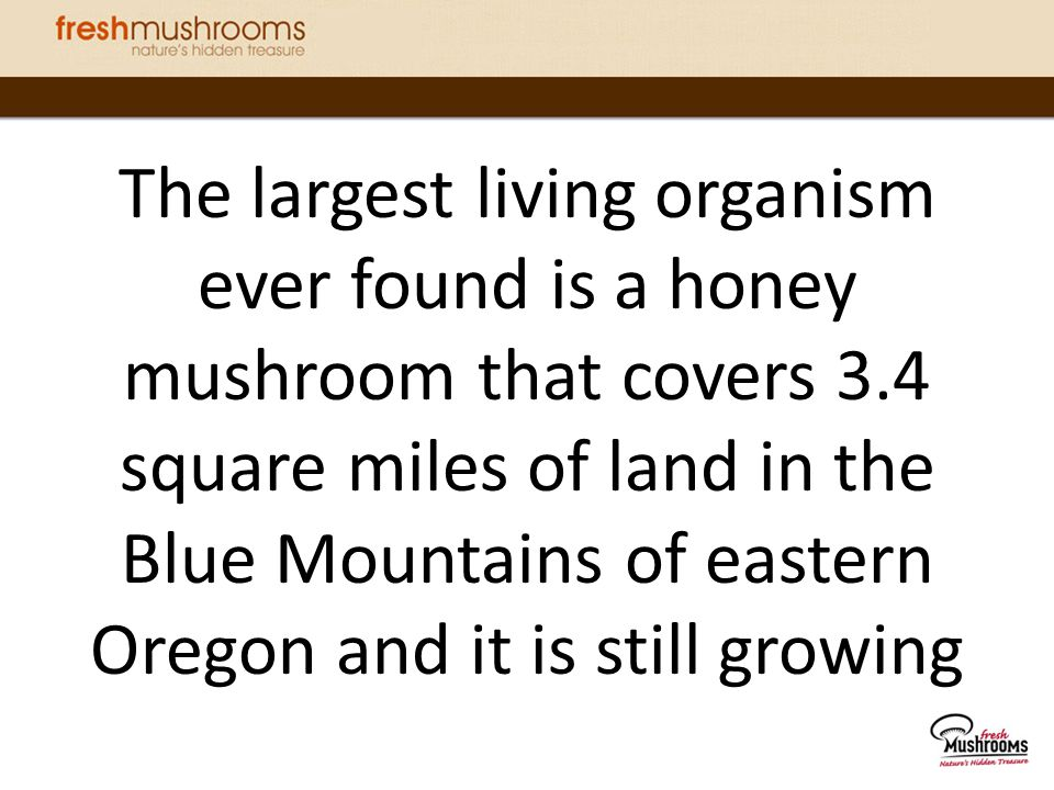 The largest living organism ever found is a honey mushroom that covers 3.4 square miles of land in the Blue Mountains of eastern Oregon and it is still growing