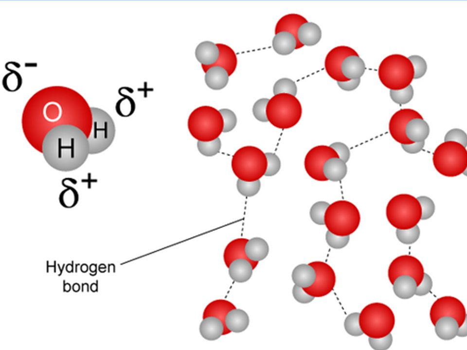 2.2.1 Water molecules are polar and hydrogen bonds form between them.