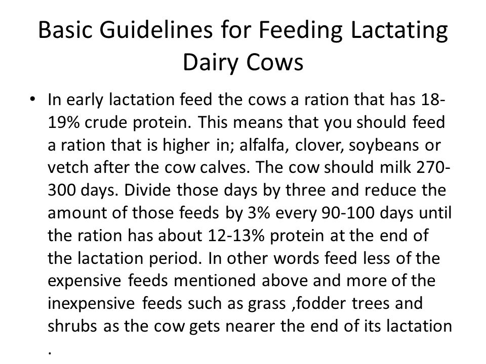 Basic Guidelines for Feeding Lactating Dairy Cows