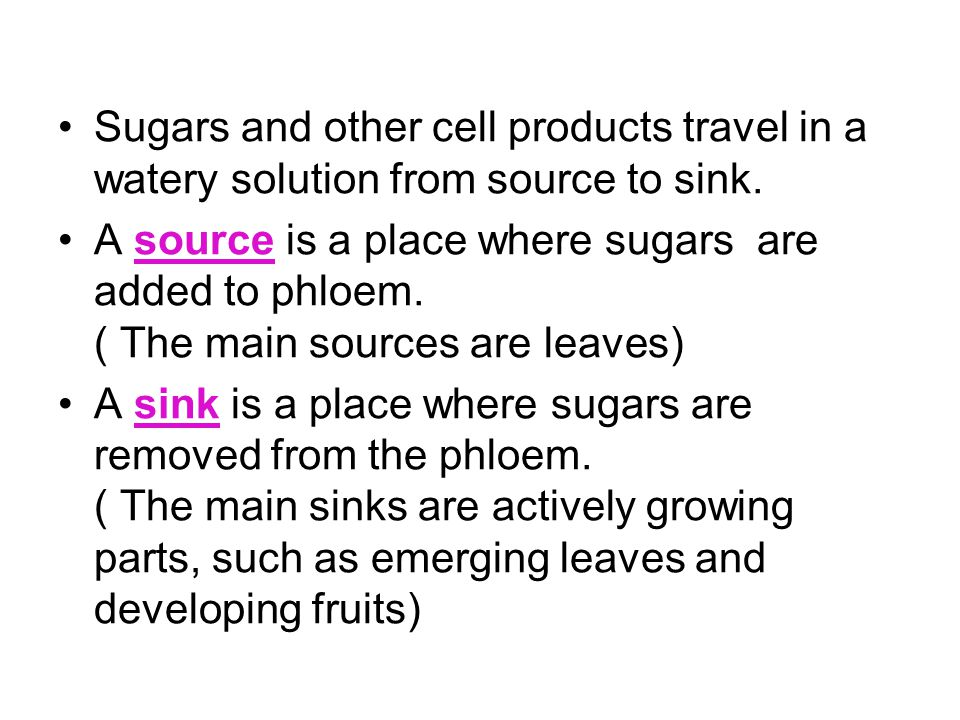 Sugars and other cell products travel in a watery solution from source to sink.