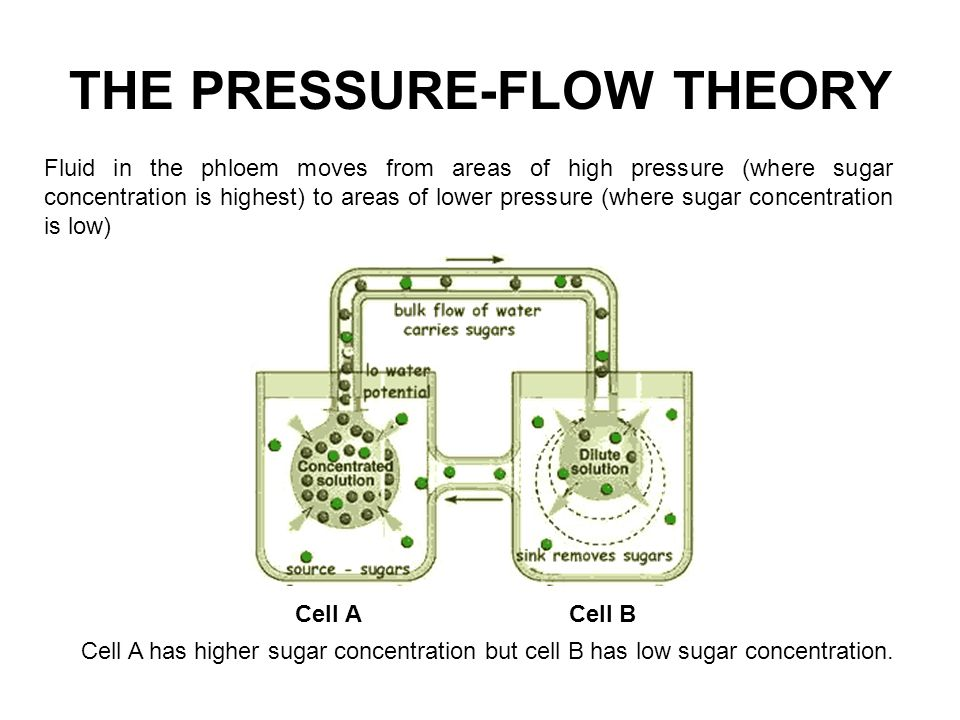 THE PRESSURE-FLOW THEORY