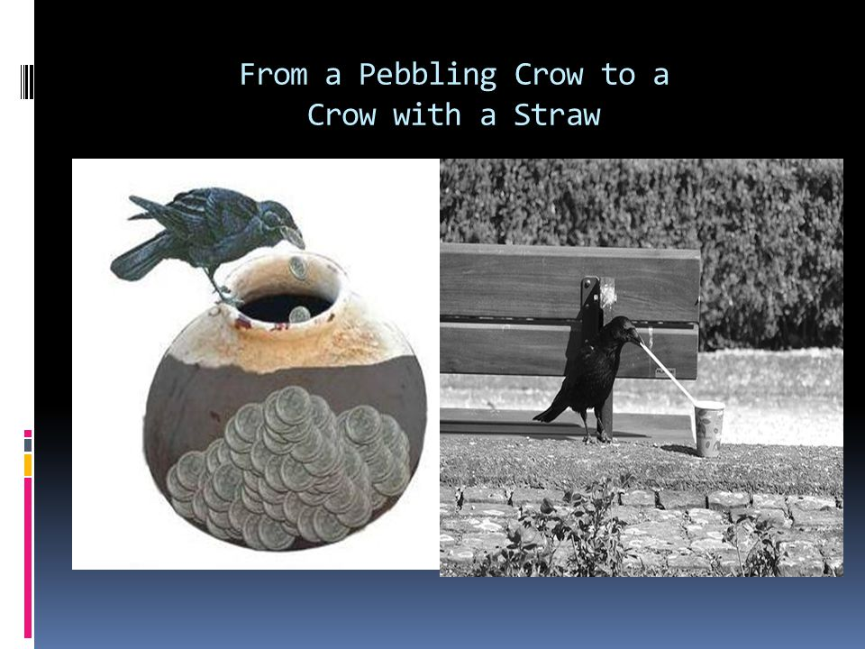 From a Pebbling Crow to a Crow with a Straw