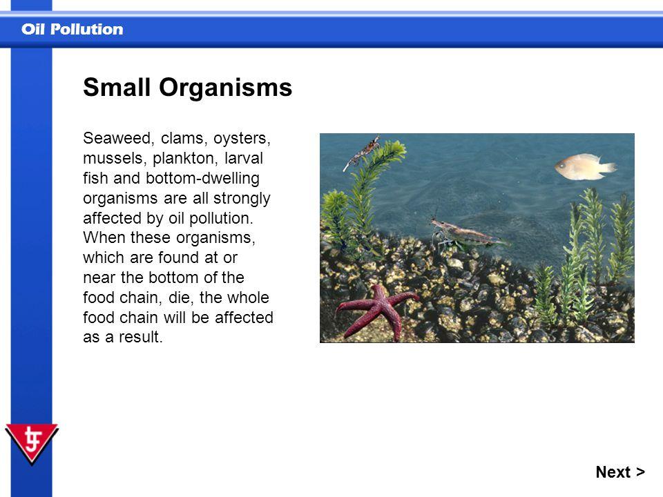 Small Organisms