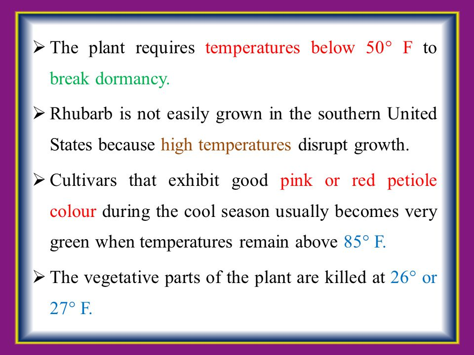 The plant requires temperatures below 50° F to break dormancy.