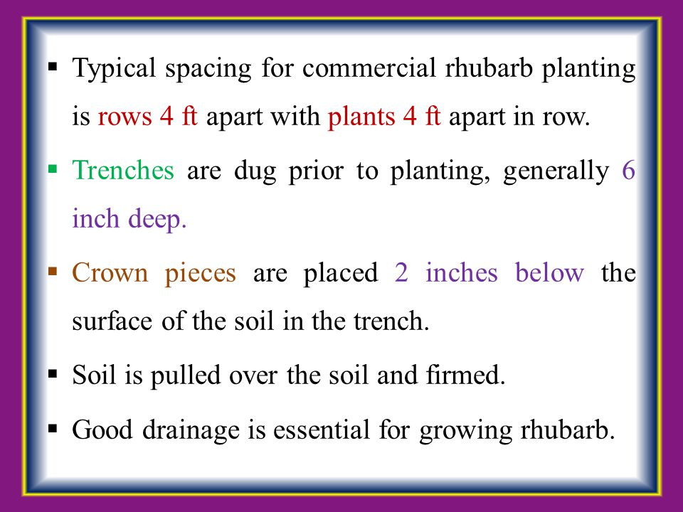 Typical spacing for commercial rhubarb planting is rows 4 ft apart with plants 4 ft apart in row.