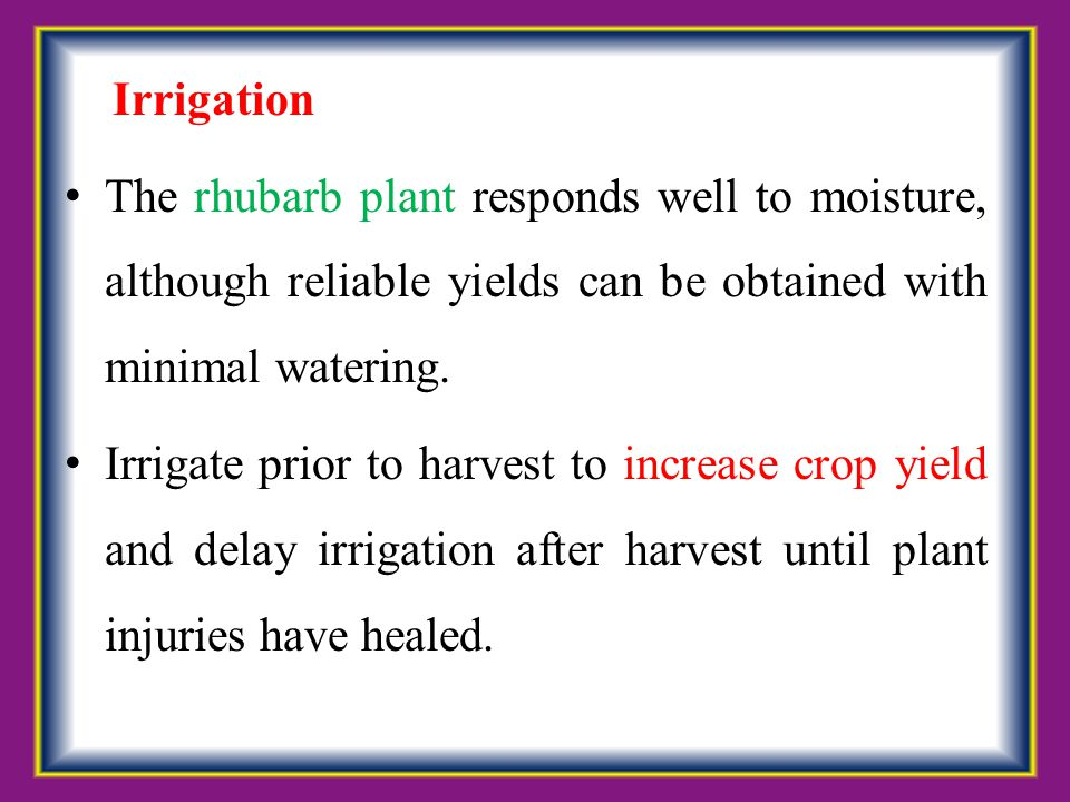 Irrigation The rhubarb plant responds well to moisture, although reliable yields can be obtained with minimal watering.