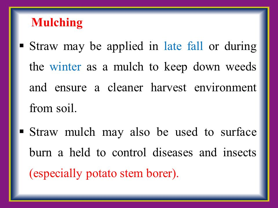 Mulching Straw may be applied in late fall or during the winter as a mulch to keep down weeds and ensure a cleaner harvest environment from soil.