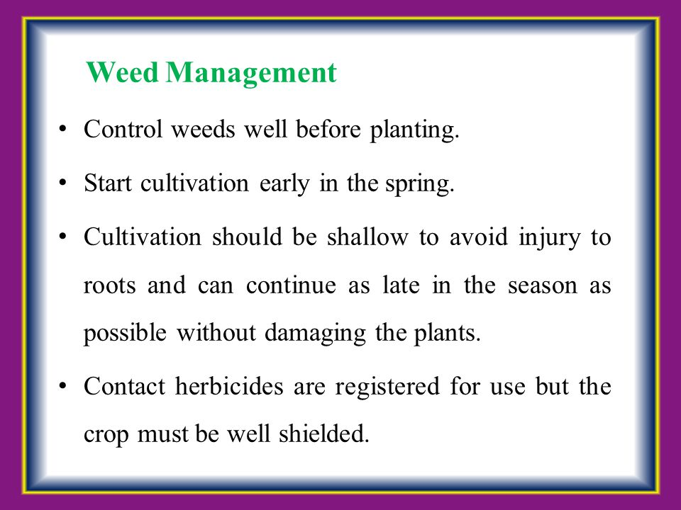 Weed Management Control weeds well before planting.