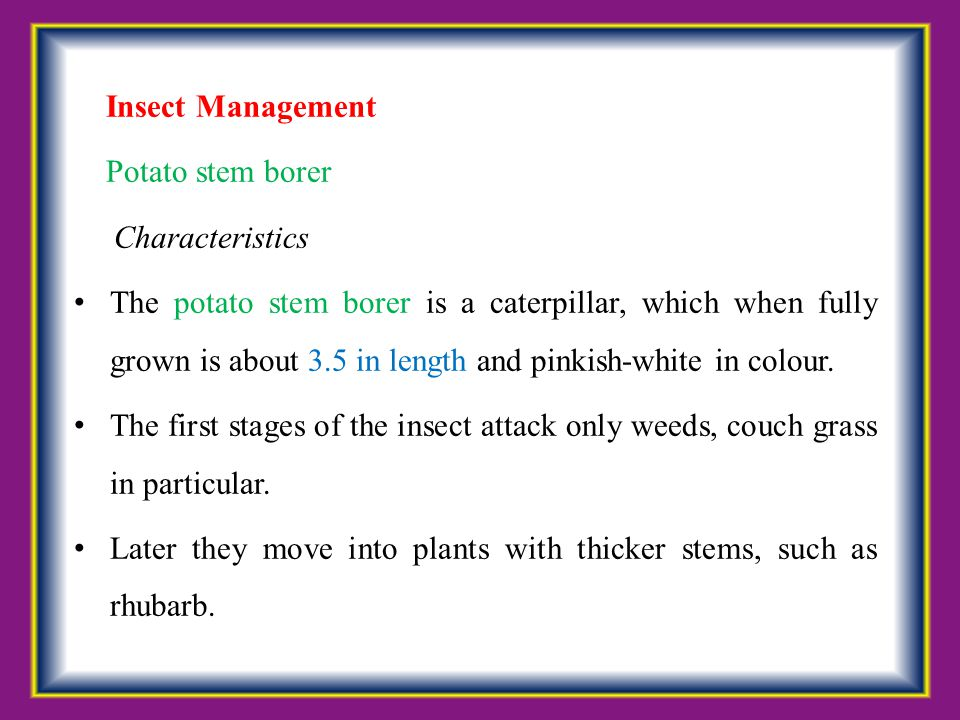 Insect Management Potato stem borer. Characteristics.