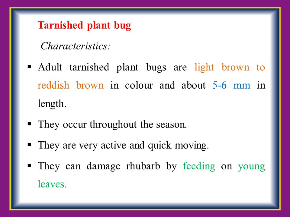 Tarnished plant bug Characteristics: Adult tarnished plant bugs are light brown to reddish brown in colour and about 5-6 mm in length.
