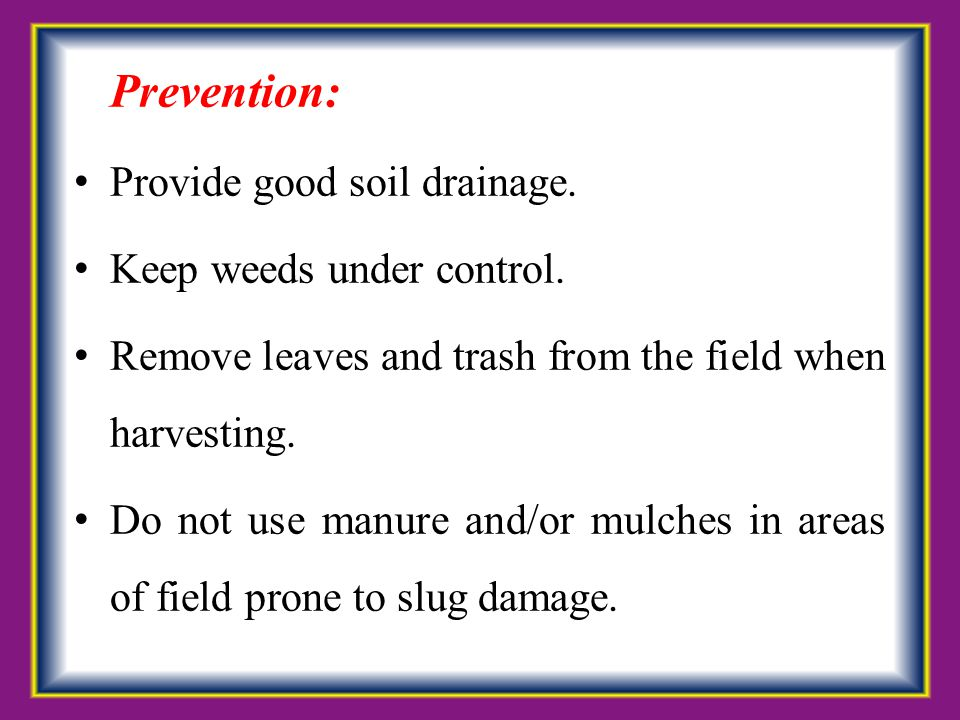 Prevention: Provide good soil drainage. Keep weeds under control.