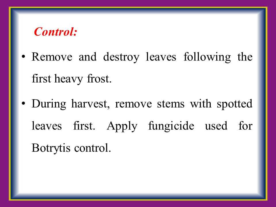 Control: Remove and destroy leaves following the first heavy frost.