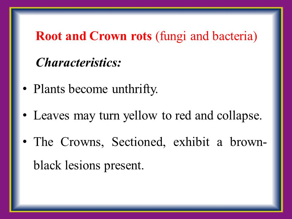 Root and Crown rots (fungi and bacteria)