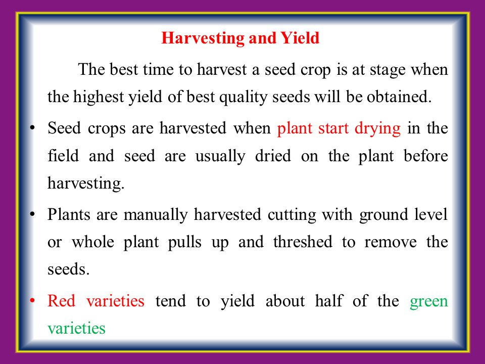 Red varieties tend to yield about half of the green varieties
