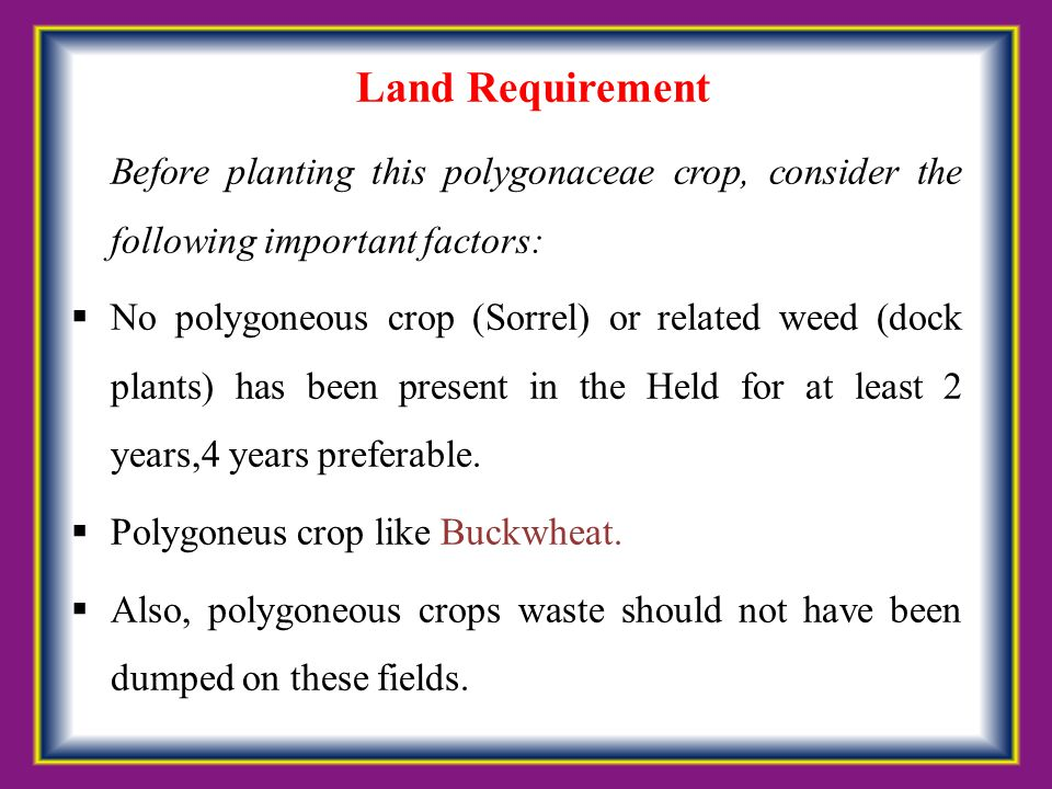Land Requirement Before planting this polygonaceae crop, consider the following important factors: