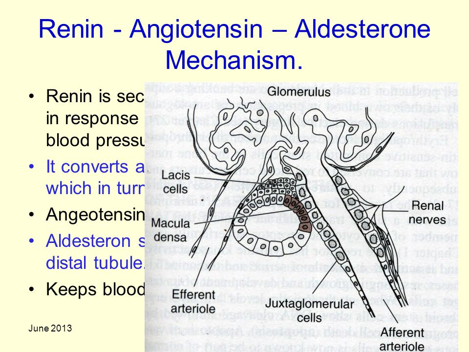 Renin - Angiotensin – Aldesterone Mechanism.