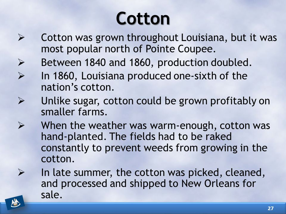 Cotton Cotton was grown throughout Louisiana, but it was most popular north of Pointe Coupee. Between 1840 and 1860, production doubled.