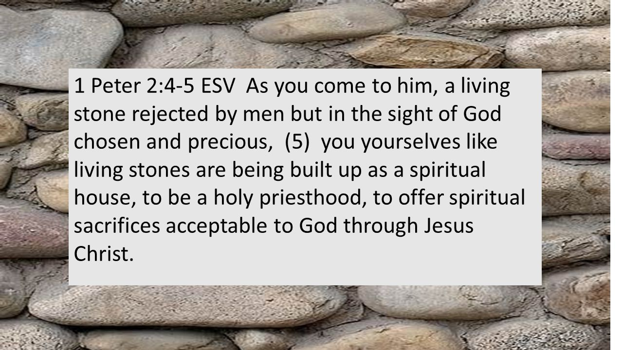 1 Peter 2:4-5 ESV As you come to him, a living stone rejected by men but in the sight of God chosen and precious, (5) you yourselves like living stones are being built up as a spiritual house, to be a holy priesthood, to offer spiritual sacrifices acceptable to God through Jesus Christ.