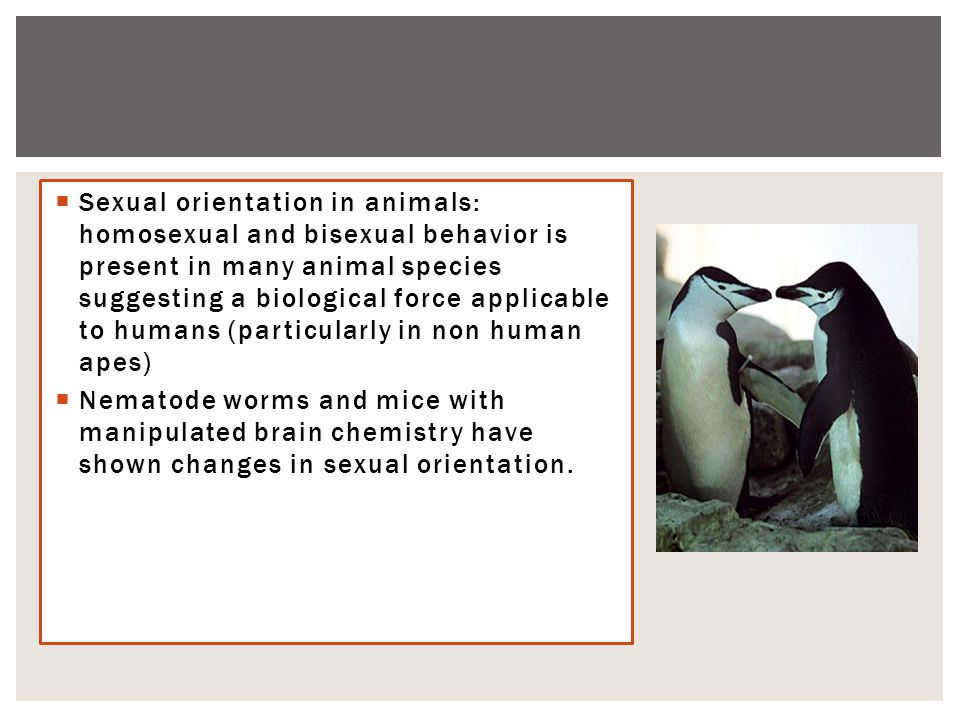 Sexual orientation in animals: homosexual and bisexual behavior is present in many animal species suggesting a biological force applicable to humans (particularly in non human apes)