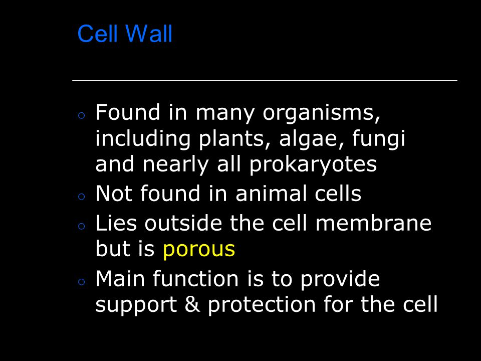 Cell Wall Found in many organisms, including plants, algae, fungi and nearly all prokaryotes. Not found in animal cells.