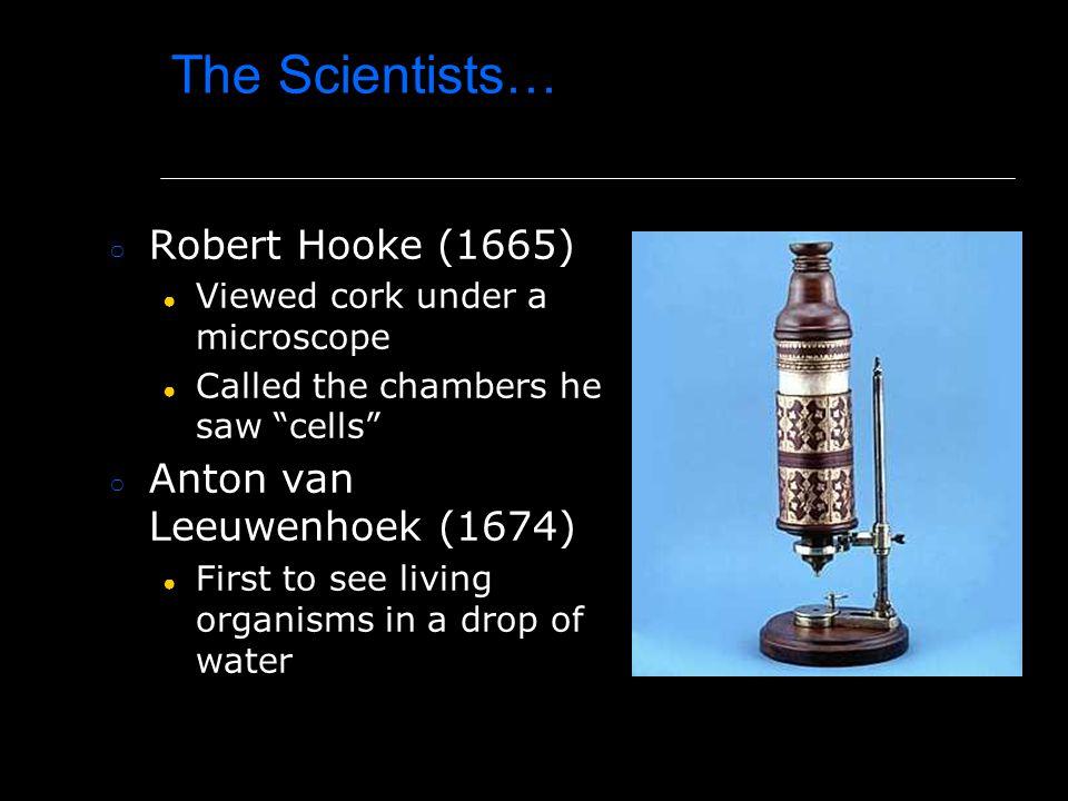 The Scientists… Robert Hooke (1665) Anton van Leeuwenhoek (1674)