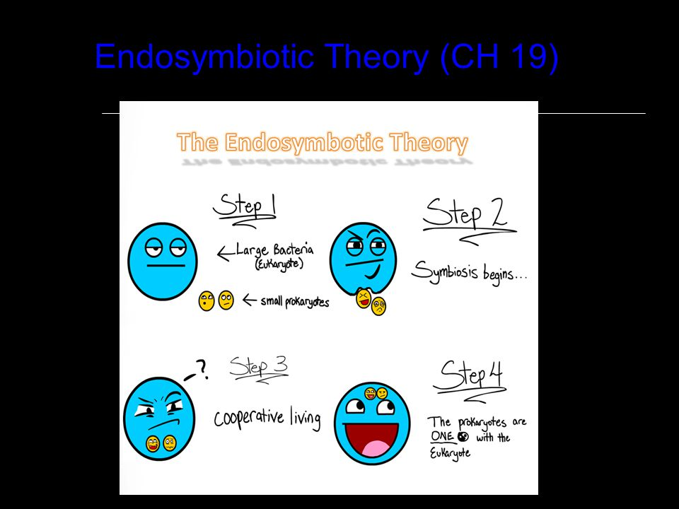 Endosymbiotic Theory (CH 19)