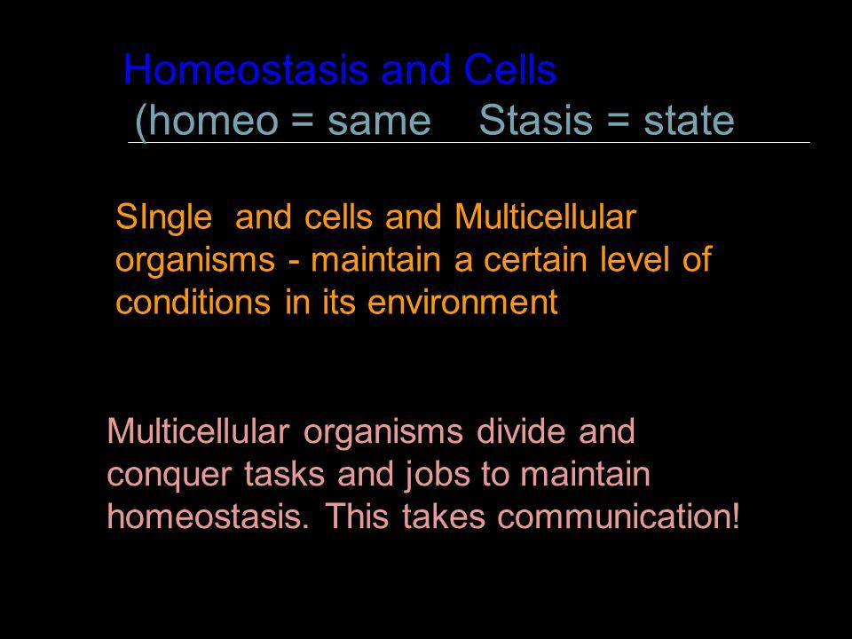 (homeo = same Stasis = state