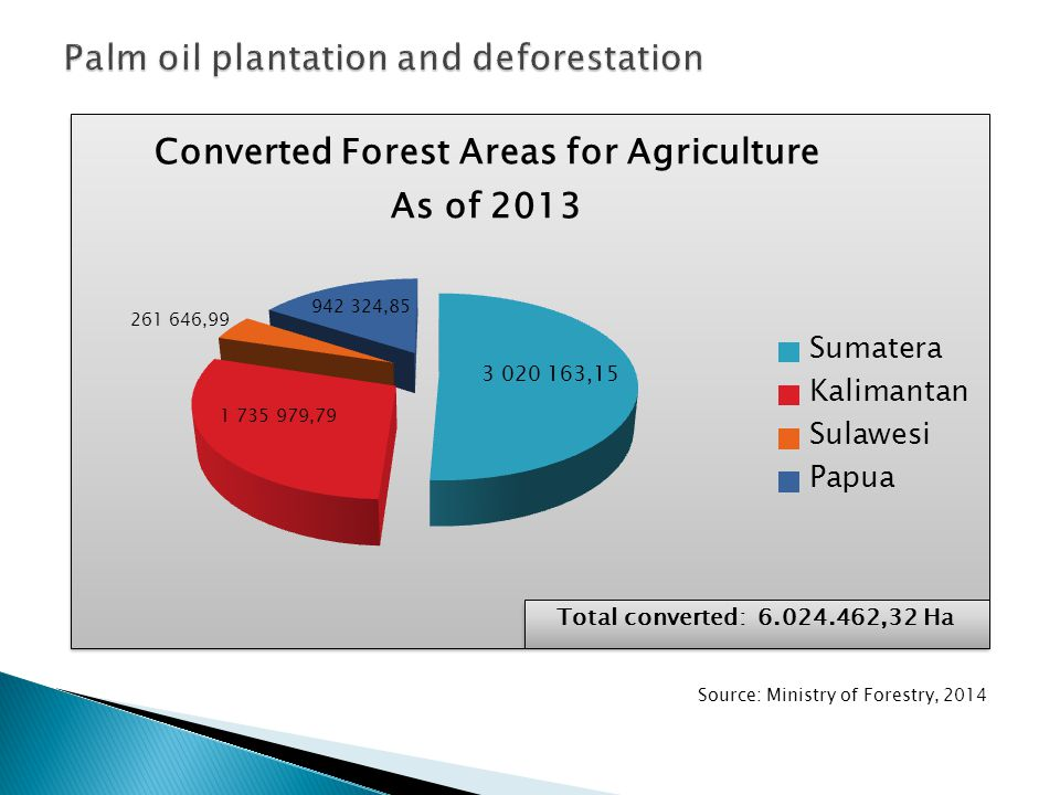 Palm oil plantation and deforestation
