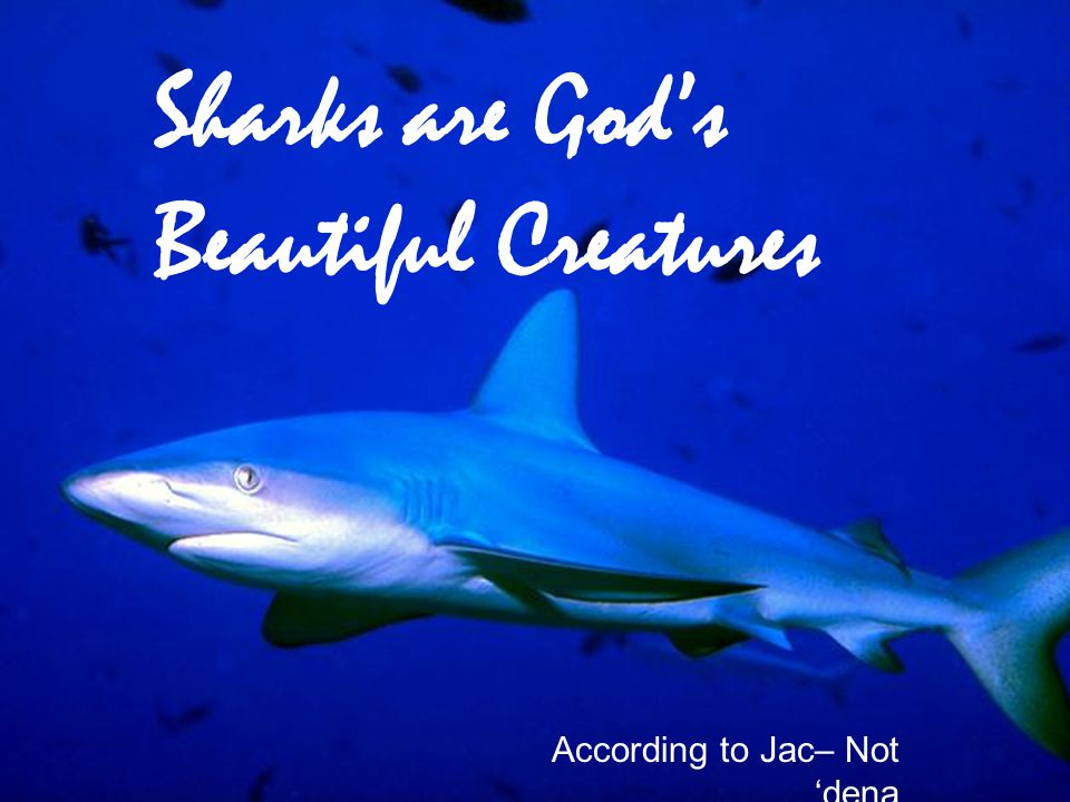 Sharks are God's Beautiful Creatures