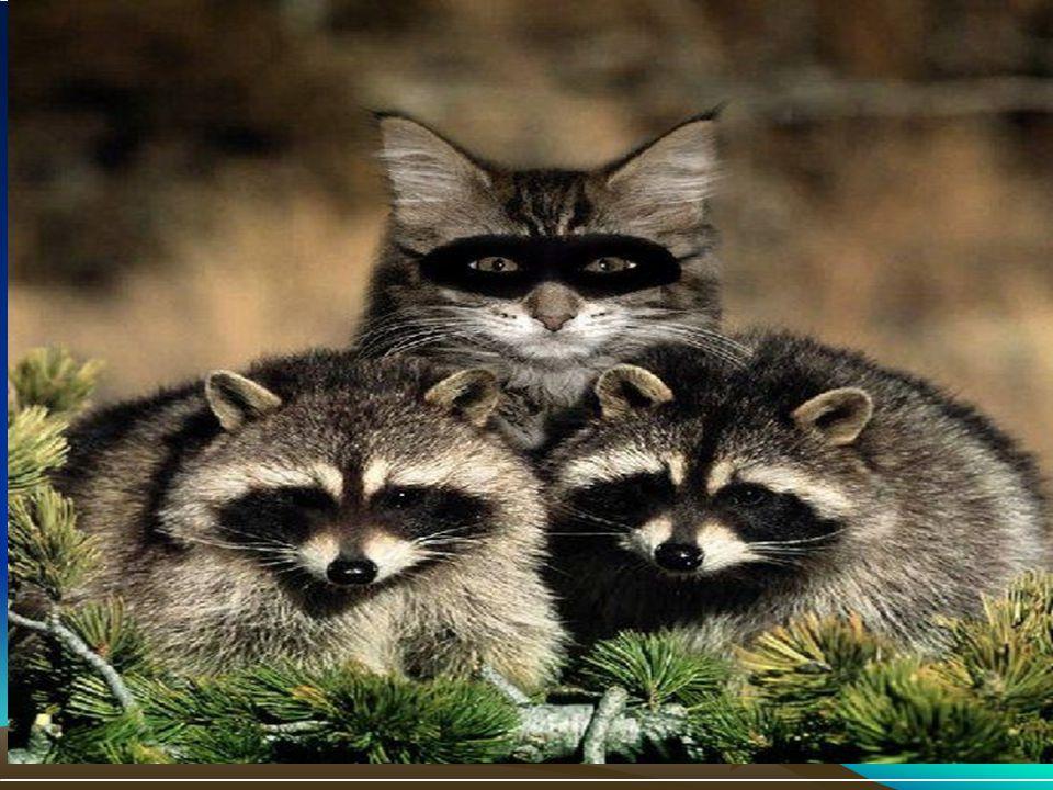 Subj: Beware of Imposters
