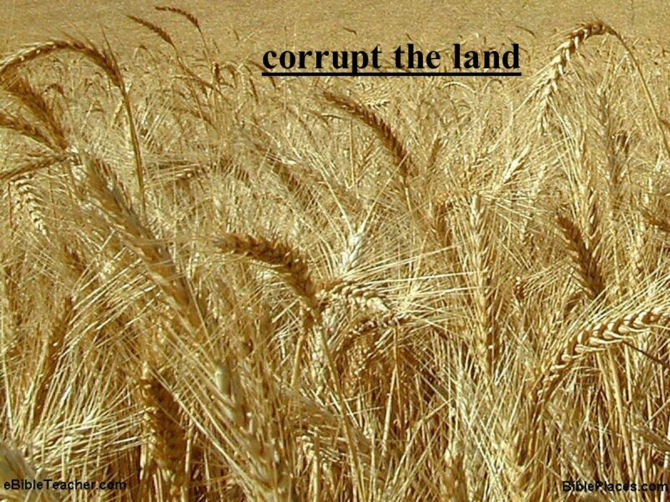 corrupt the land Gan – a contraction of began Gender Genealogy Genesis