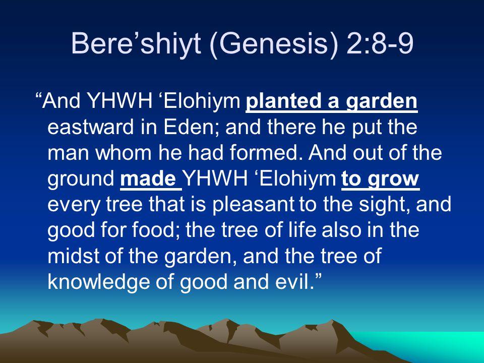 Bere'shiyt (Genesis) 2:8-9