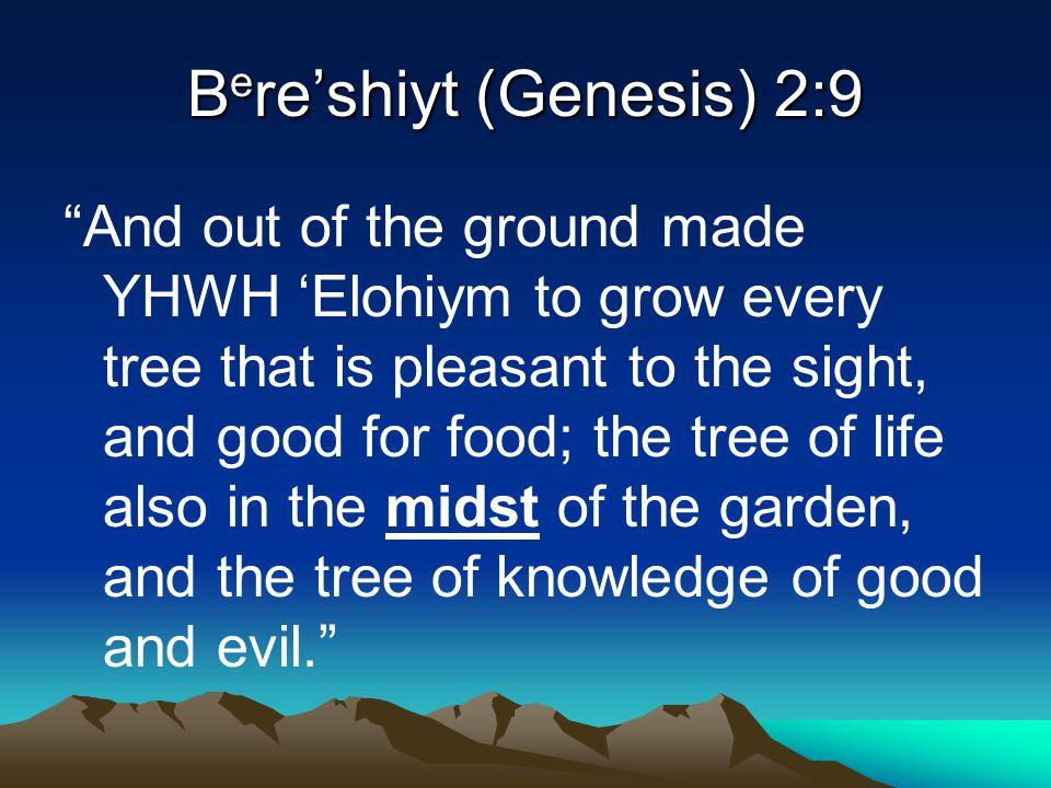 Bere'shiyt (Genesis) 2:9