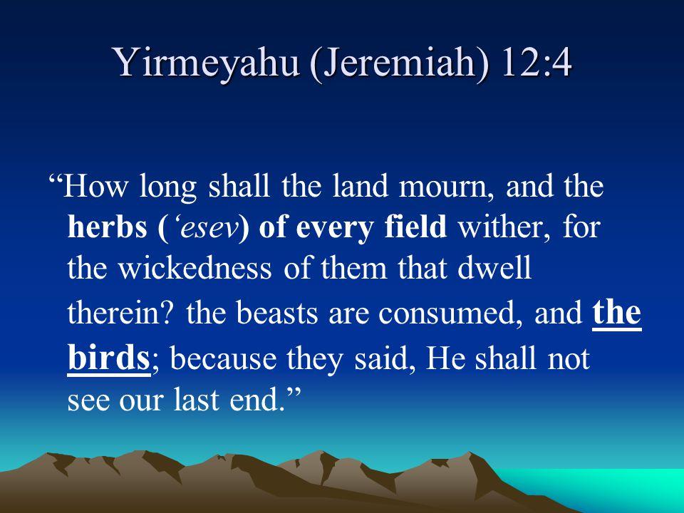 Yirmeyahu (Jeremiah) 12:4