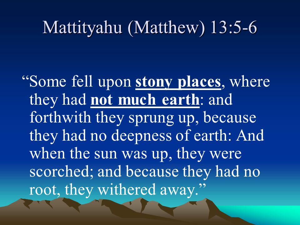 Mattityahu (Matthew) 13:5-6